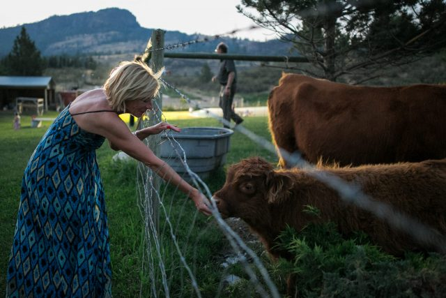 A woman in a blue dress feeds grass to a brown cow at Covert Farms Winery in Oliver, BC. Photo by Clint Bargen Photography.